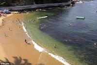 Des milliers de poissons se réfugient sur les plages d'Acapulco au Mexique