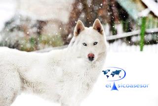 psicologia-terapia con animales-psicoterapia