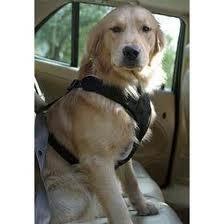 Cinturon de seguridad para perros
