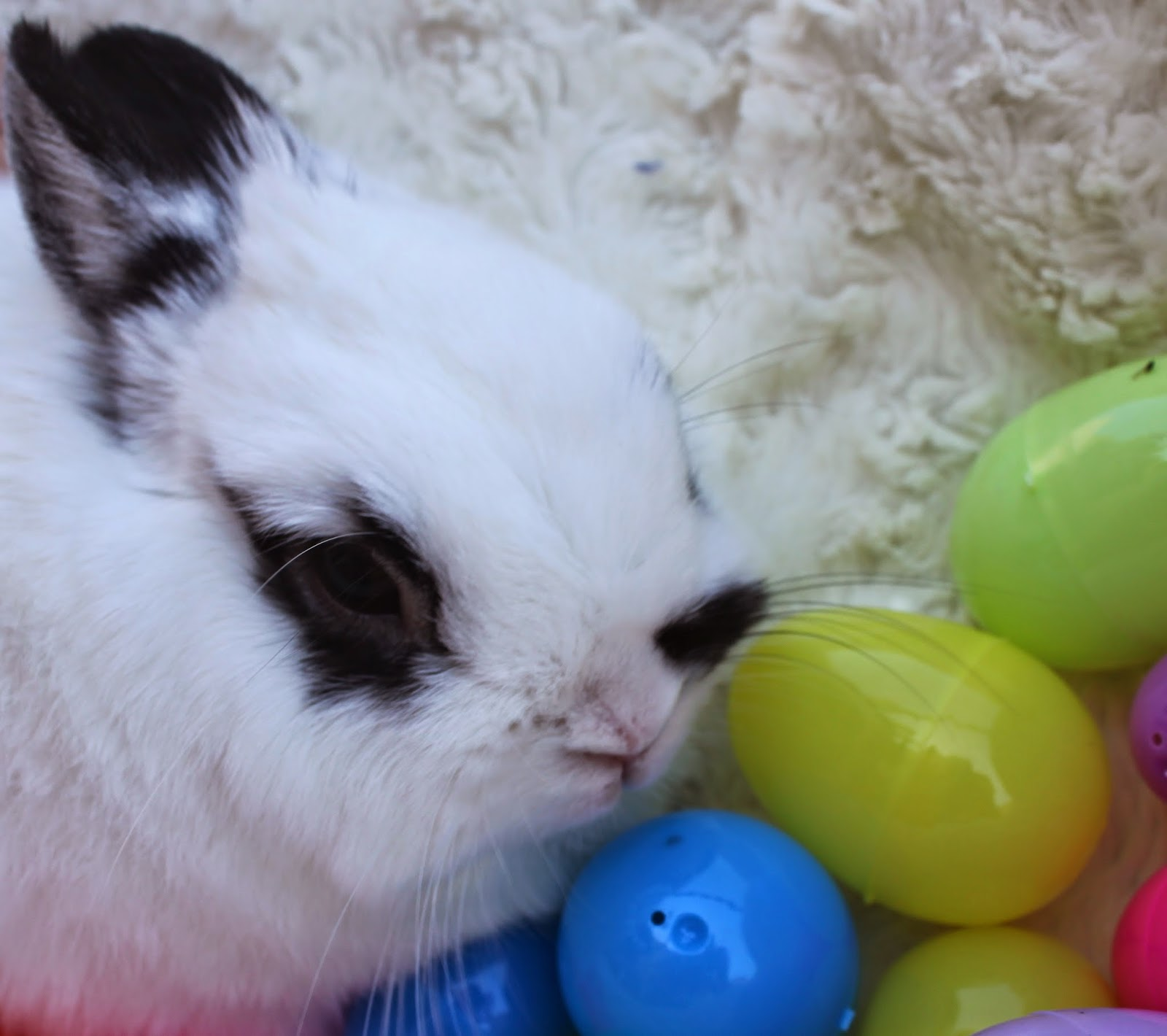 Happy Easter from Half Stache the bunny photo
