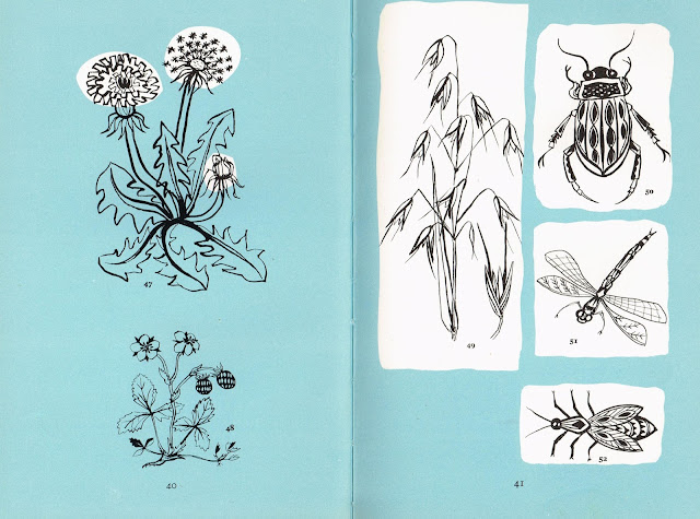 Page from Canvas Work by Jennifer Gray 1960 ... Flora and Fauna
