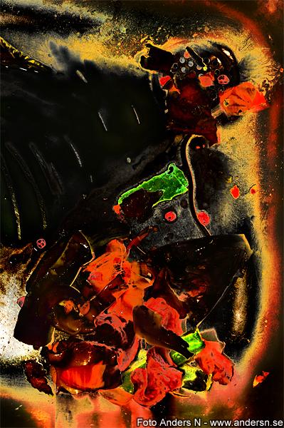 firebird, eldfågel, eldfågeln, foto anders n, tsyfpl