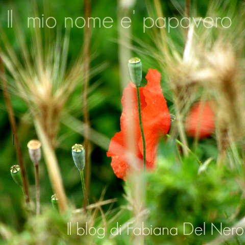 Il mio nome è Papavero