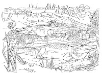 3 Realistic Alligator On The Swamp Coloring Pages