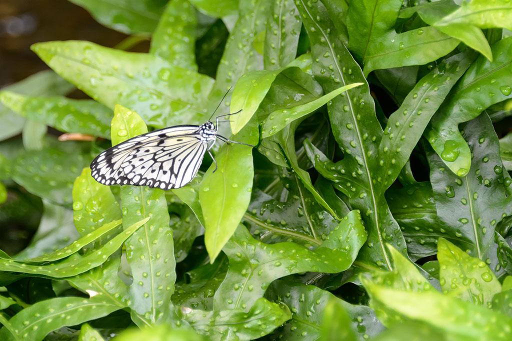 Butterfly Garden Cafe Kells Menu