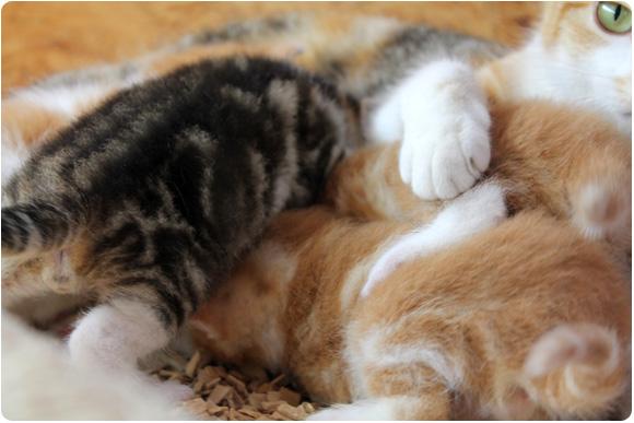 Baby-Katzen