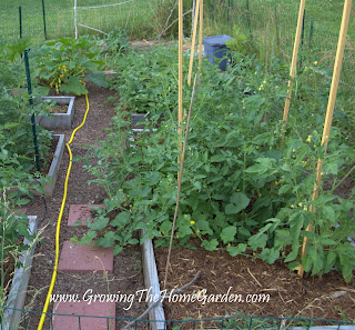 Raised bed garden with tomatoes