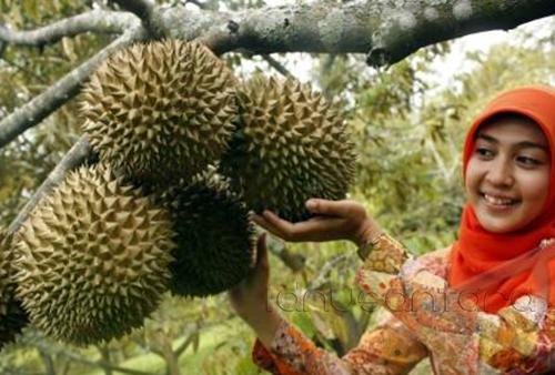 Wisata Kampung Durian Jombang, Jawa Timur