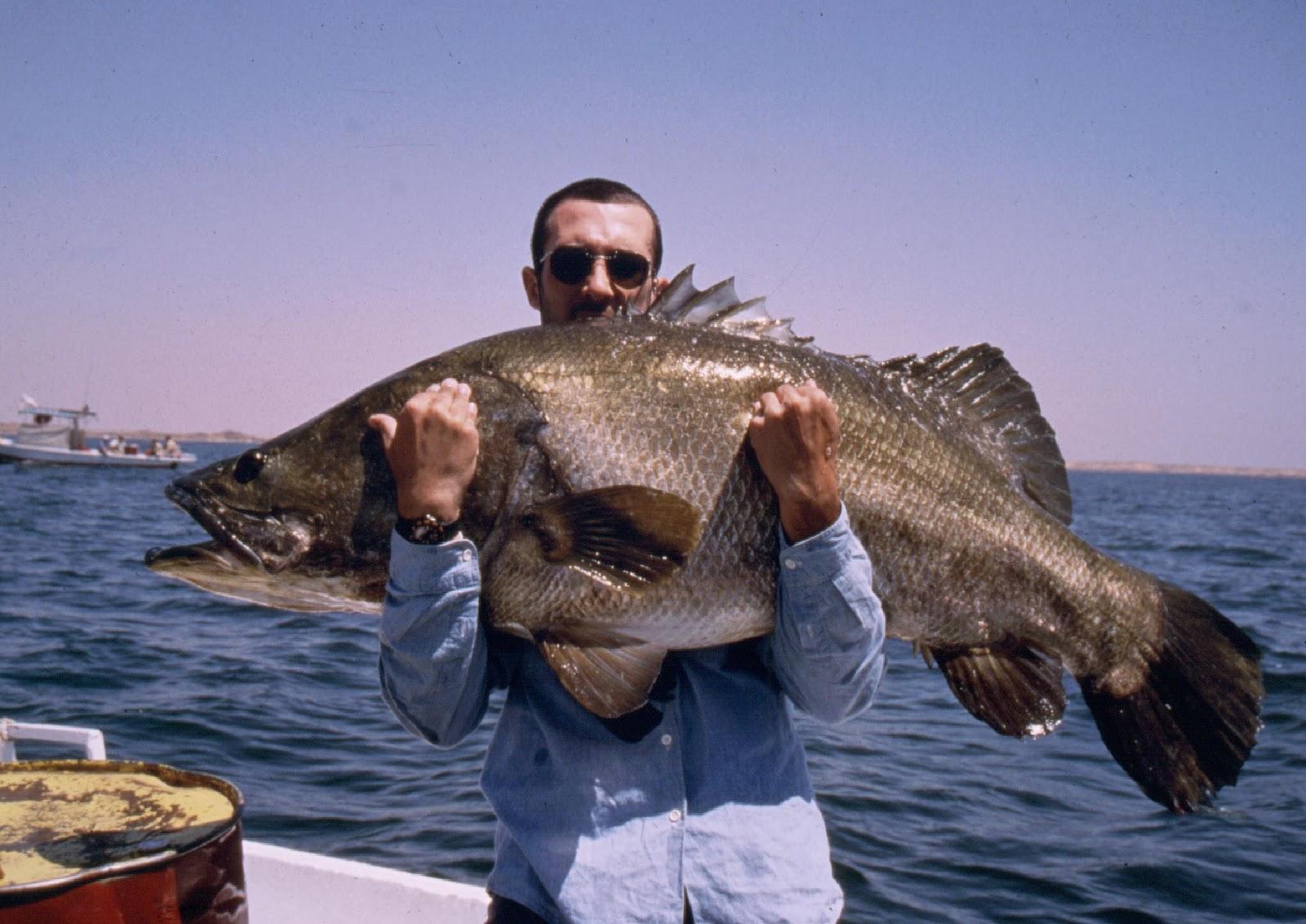 Che pesce si pesca in questo periodo