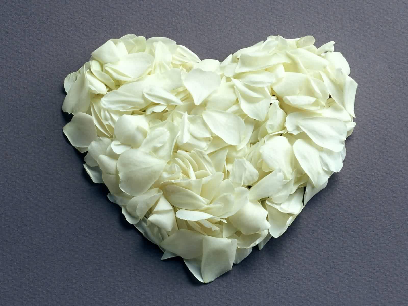 white rose flowers - photo #17