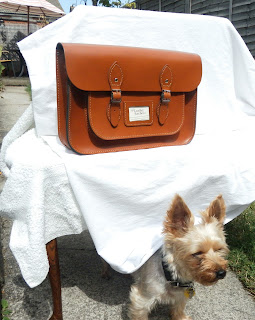 The Leather Satchel Company london tan 14 inch with Yorkshire terrier Lottie under Table classic vintage style fashion