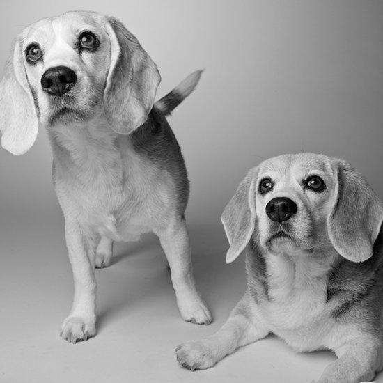 Amanda Jones fotografia cachorros através dos anos dog years cães idades