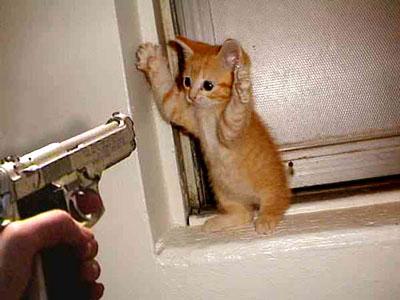 gambar anak kucing lagi di todong pake pistol
