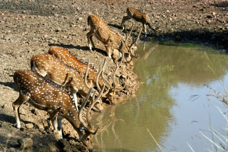 Ranthambore  National Park Tour Packages