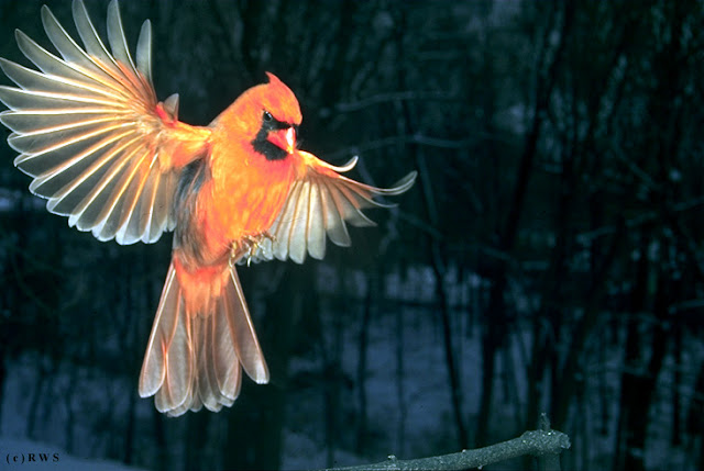 நான் பார்த்து ரசித்த புகைப்படங்கள் சில.... - Page 2 Flying+Birds+%252813%2529
