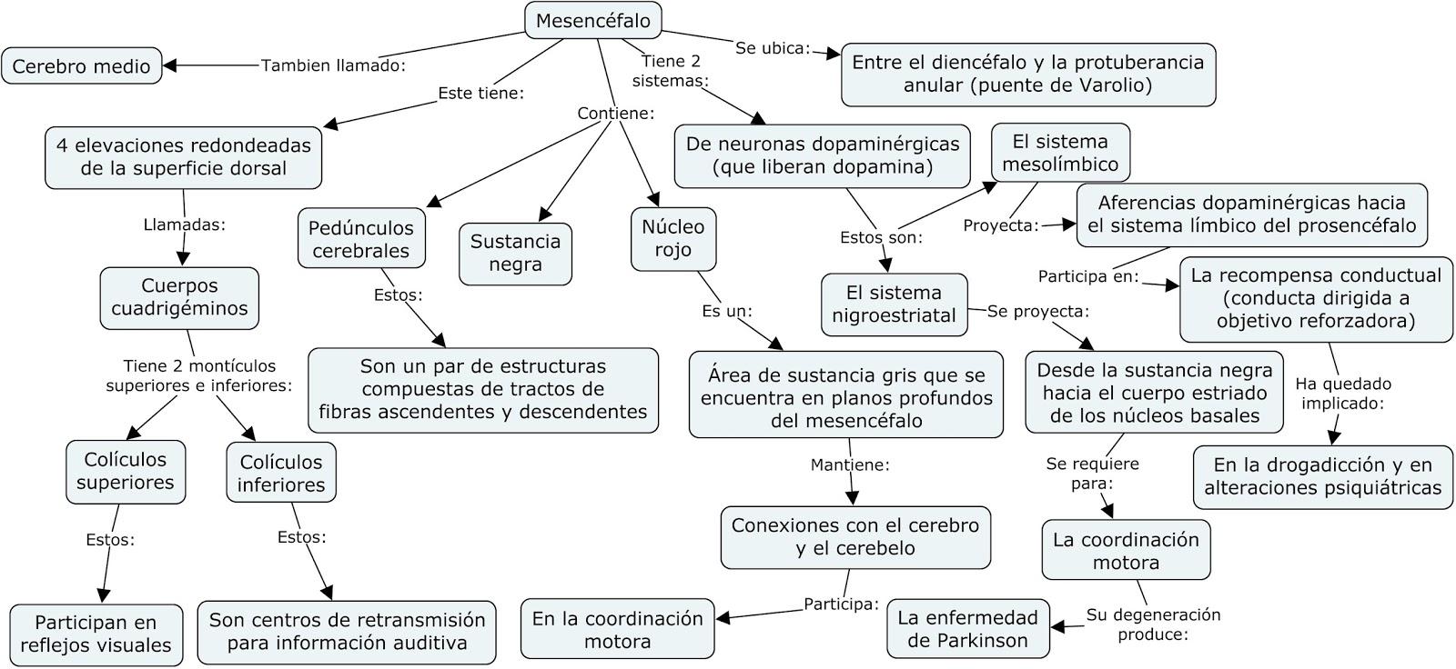 6.2 Mesencéfalo - Anatomia del sistema nervioso y organos de los ...