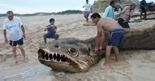 Mistura cobra e piranha gigante - 12 metros