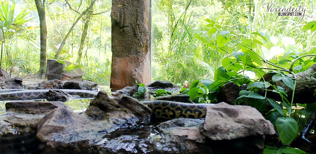 Lost World of Tambun Petting Zoo Serpentarium water snake