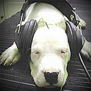 Deaf Dog