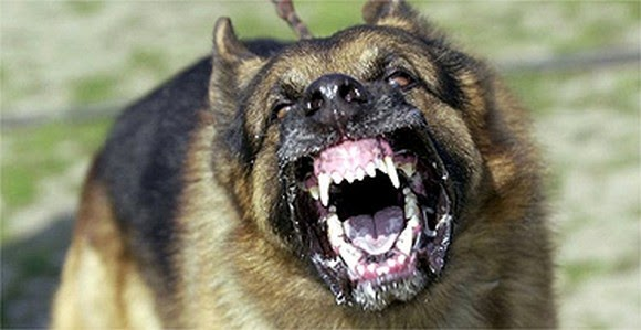 http://www.mesrianilaw.com/los-angeles-dog-bite-attorneys.html