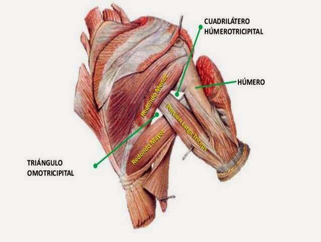 generalidades de anatomia | apredizaje de anatomia de la forma mas ...