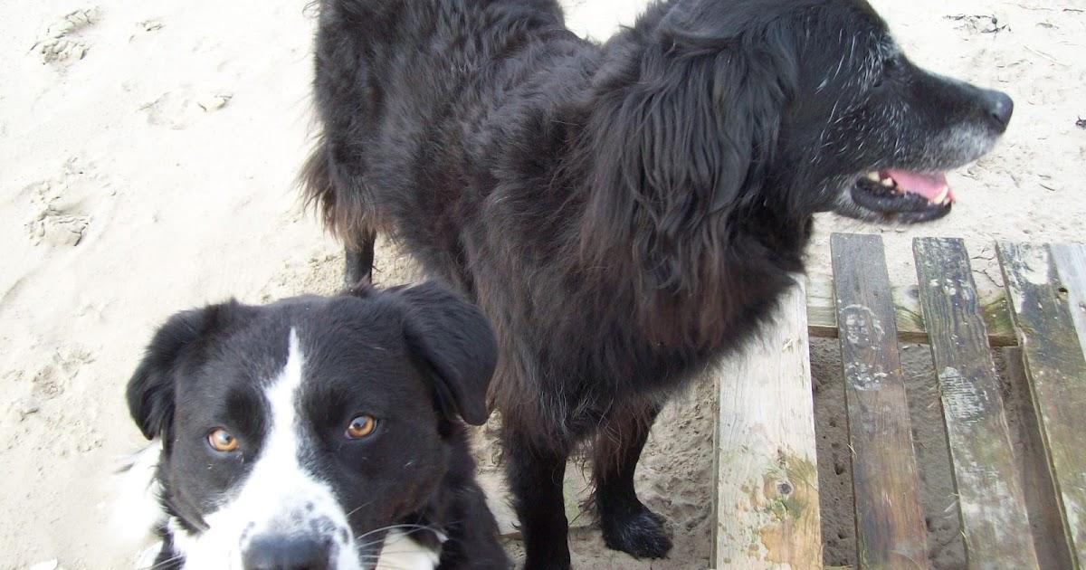 Good Dog Walks Near Saltburn