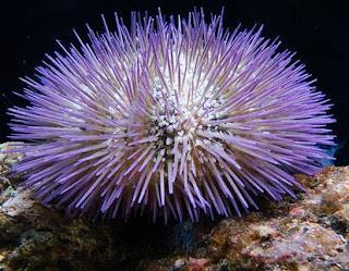 Aneka Makhluk Hidup Laut dan Manfaatnya