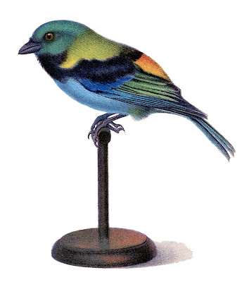 Vintage Bird on Stand Image - Tanager