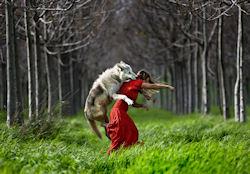 Caperucita es atacada por el lobo by Shlomi Nissim | clic para ampliar esta imagen