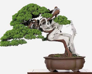 Tips Cara Merawat Bonsai