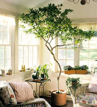 Dear September I Want An Indoor Tree