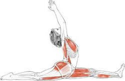 Hanumanasana: Strengthening and Stretching Workshop
