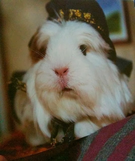 Guinea Pig Nativity Mary