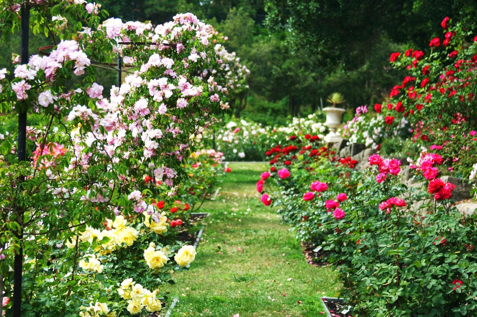 Роза садовая Есть цветы   floretsru