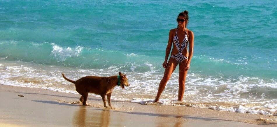 Praia Key Biscayne em Miami com Cachorro