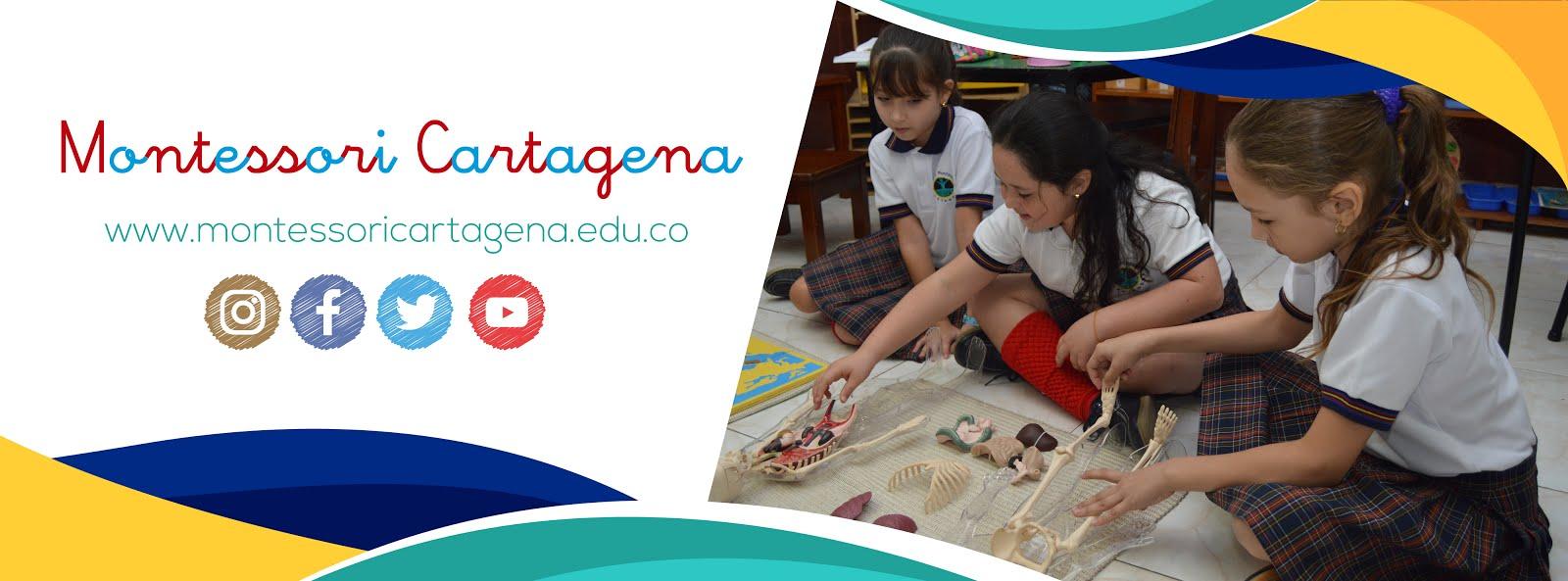 Iguana Blog