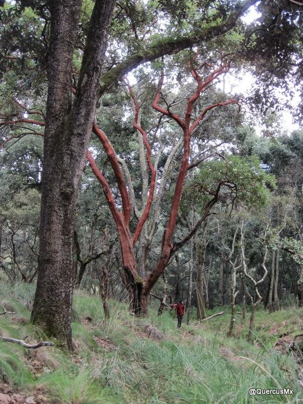 Caminando en el bosque mesófilo de montaña - Volcán de Tequila
