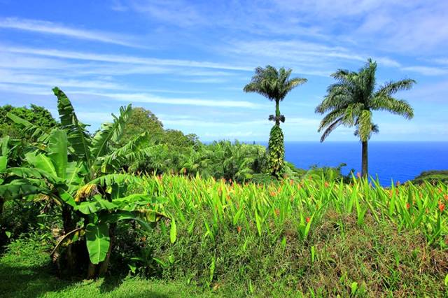 Cool Funny Pictures Gardens Of Maui Images