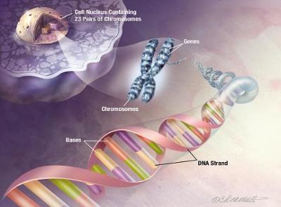 Kết quả hình ảnh cho sinh học di truyền