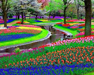 Mil flores de colores  Paisajes de flores