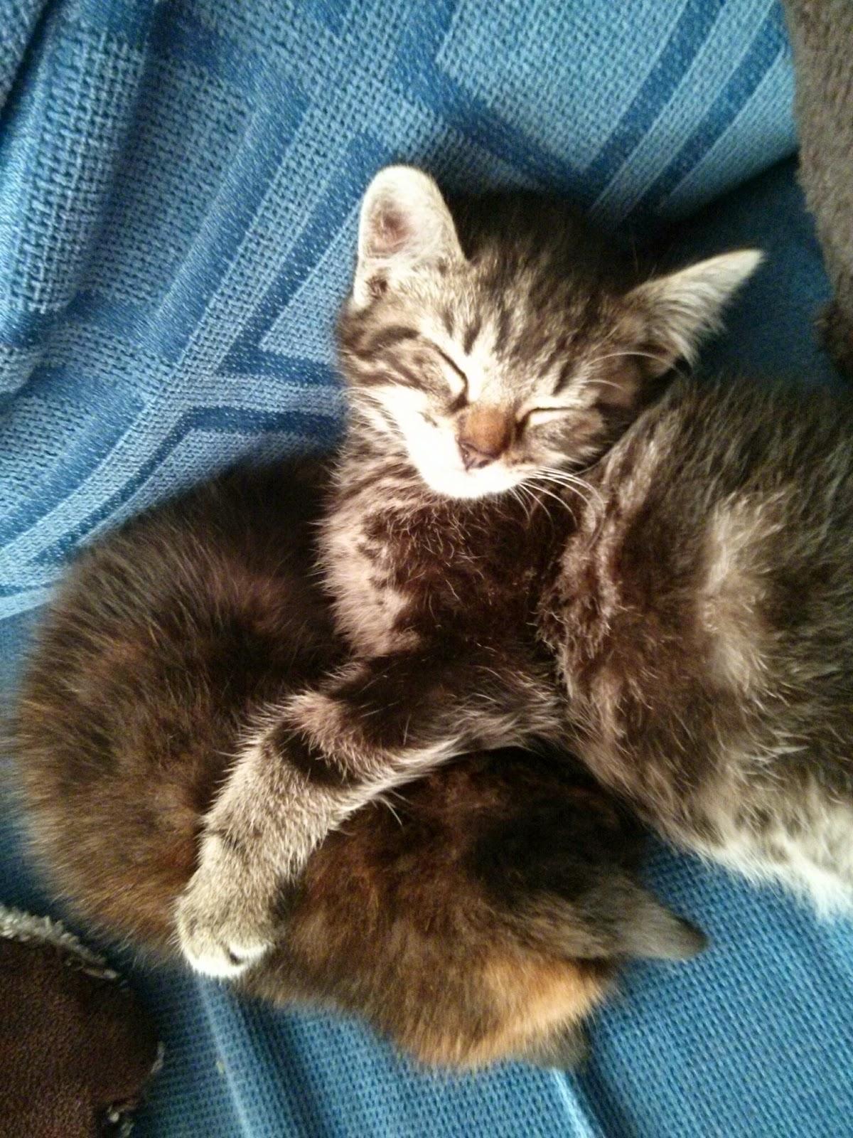 Mario and Peach The Kittens sleeping