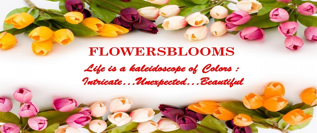 "FLOWERSBLOOMS by ""Elvie"""