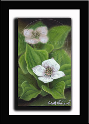 Canada Bunchberry Painting in pastel by Canadian Nature Artist Colette Theriault