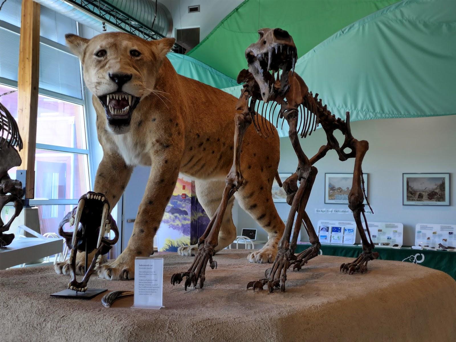 Beringia Museum