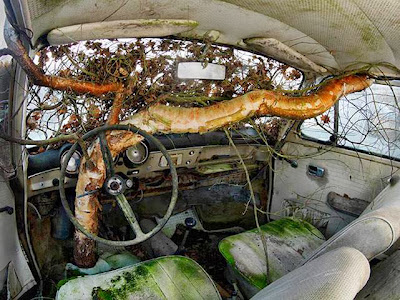 Birch Tree in Old Volkswagen