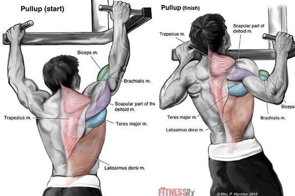 2 best bicep exercises for total development