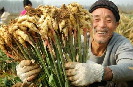 Contoh Peluang Usaha Bidang Pertanian Menjanjikan