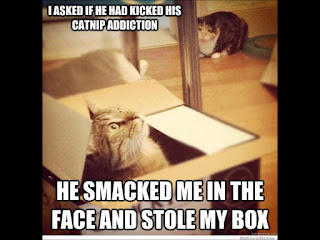 funny cat memes he smaked me in the face and stole my box