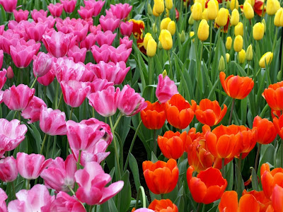 HD Flowers Widescreen Wallpapers