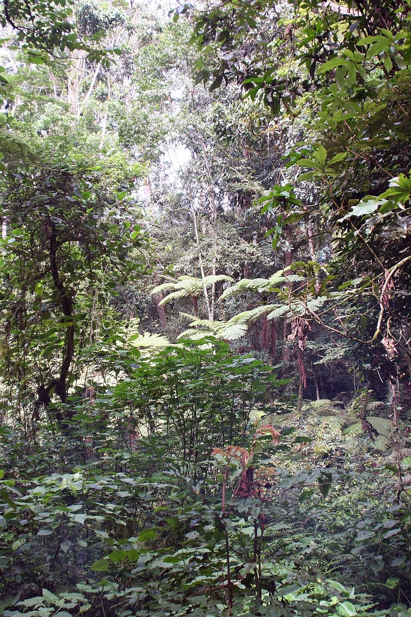 Inside the Kalinzu Forest in Uganda